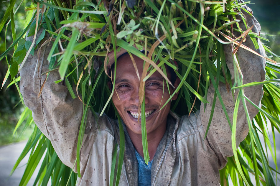 A man carrying grass over his head in the mountains of Cebu island, Philippines.